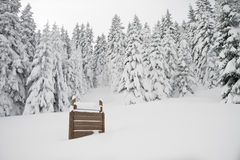 Sign in a snowy forest, broader view Royalty Free Stock Images