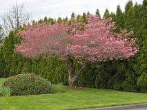 Sign of Spring in Portland Oregon. Stock Photos