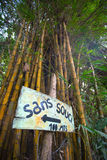Sign stating no problem in French and bamboo. Sign stating no problem in French with giant bamboo tree in the background. Minca, Colombia 2014 Royalty Free Stock Image