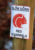 Sign stating SLOW DOWN RED SQUIRRELS Royalty Free Stock Photos