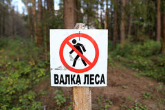 Sign: tree felling. Warning sign tree felling (russian:валка леса) nailed to tree in forest. Moscow region, Russia Royalty Free Stock Images