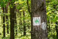 Sign on the tree. In the forest Royalty Free Stock Images