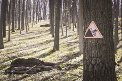 A sign on a tree in the forest warning that there is a trail for extreme descent of bike-climbers.  Royalty Free Stock Photo