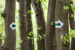 Sign on trees. Sign on the trees in polish wood Stock Photos