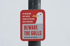 Sign warning about danger of scavenging gulls Royalty Free Stock Photo