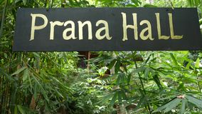 Sign with writing near tropical plants. Sign of facility for yoga and meditation with Prana Hall writing hanging near. Green exotic plants in garden stock video footage