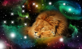 Sign of the zodiac leo. Portrait of a sleeping lion in a colorful universe with some galaxies and stars and the zodiac sign leo Royalty Free Stock Images