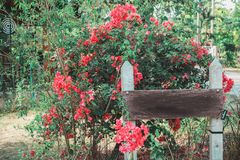 Signage i trädgården royaltyfria foton