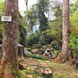 signage non-fumeurs dans la forêt moussue Photographie stock libre de droits