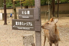 Signage och hjortar i Nara Park Arkivbilder