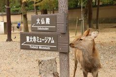 Signage und Rotwild in Nara Park Stockbilder