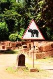 Signal of elephant Royalty Free Stock Photo