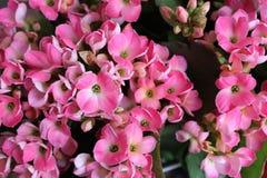 Signal för rosa och vit blomma arkivfoto