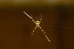 Signature Spider in Web stock photography