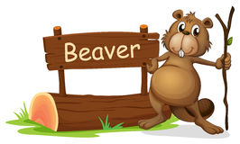A signboard and a beaver with a stick Royalty Free Stock Photo