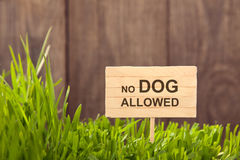 Signboard no dog allowed on Grass background of wood planks, Royalty Free Stock Images