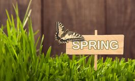 Signboard Spring on Grass background of wood planks, with butterfly Fresh green lawn near rustic grunge fence.  stock image