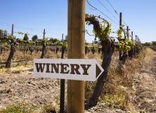Signe d'établissement vinicole avec de vieilles vignes Photo stock