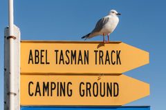 Signe d'Abel Tasman Track avec la mouette rouge-affichée Image stock