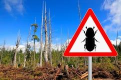 Signe d'attention de scarabée d'écorce photographie stock