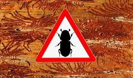 Signe d'attention de scarab?e d'?corce photo stock