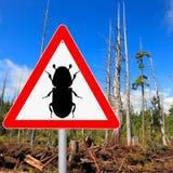 Signe d'attention de scarab?e d'?corce photos stock