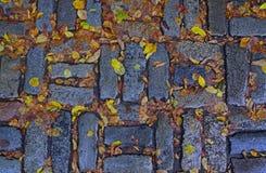 Signe d'automne avec les feuilles jaunes tombées Photo stock
