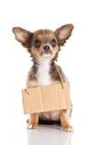 Signe de chien d'isolement sur le fond blanc Image libre de droits