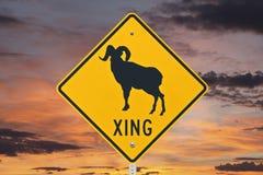 Signe de croisement de moutons de Big Horn avec le lever de soleil Photos libres de droits