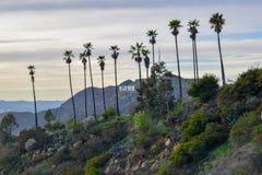 Signe de Hollywood entouré avec des palmiers sur le bâti Hollywood au coucher du soleil image libre de droits