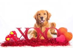 Signe de l'esprit XOXO de chien de Saint-Valentin Images libres de droits