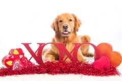 Signe de l'esprit XOXO de chien de Saint-Valentin Image libre de droits