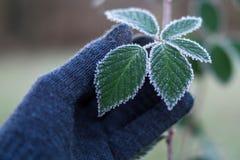 Signe de l'hiver Photos libres de droits