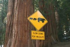 Signe de route pour des ours Photographie stock libre de droits