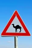 Signe de route - prenez garde du croisement de chameau Image stock