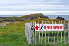 Signe de site de macareux près des falaises dans Terre-Neuve photo libre de droits