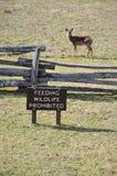 Signe interdit par faune alimentant avec des cerfs communs photos libres de droits