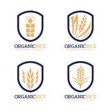 Signe organique de logo de riz avec le riz non-décortiqué moderne d'or de marine dans la conception de vecteur de frontière de ca Images libres de droits