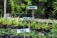 Signes d'herbes Image stock