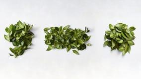 Signes de ponctuation des feuilles vertes Image libre de droits
