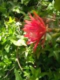Signes des fleurs de fleur de ressort photographie stock