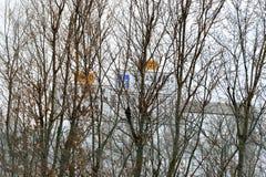 Signes français de route de rue vus par les branches en bois Photos libres de droits