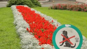 Signez le chien menaçant marchant sur la pelouse près du théâtre national croate, culture banque de vidéos