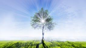 Signle träd i fältet Arkivfoto