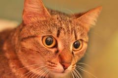 Signor Cat Fotografia Stock Libera da Diritti