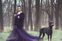 Signora affascinante in vestito da sera viola e pelliccia dallo zecchino lussuoso che stanno nel legno con il suo cane del pinsch fotografia stock
