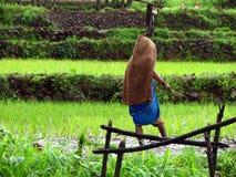 Signora in aziende agricole Fotografia Stock Libera da Diritti