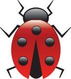 Signora Bug Immagini Stock Libere da Diritti