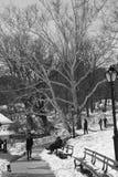 Signora che cammina a New York Central Park Manhattan Fotografia Stock Libera da Diritti