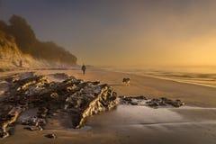 Signora che cammina un cane lungo la spiaggia nebbiosa nella mattina fotografia stock libera da diritti